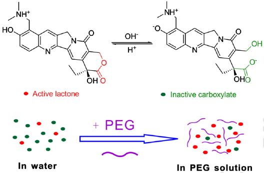聚乙二醇(PEG)是一种著名的医用高分子,在药剂学上尤其有多种用途。最近,复旦大学高分子系丁建东教授课题组发现了这个经典分子的新用途。 他们发现,简单添加PEG均聚物到喜树碱类药物的水溶液中,即可通过药物与高分子的相互作用而提高药物的闭环形式。多年来,喜树碱类药物在生理pH条件下有药效的闭环形式明显少于有副作用的开环形式是该类著名抗癌药物的著名难题,而丁建东教授课题组基于其发现所提出的改良方案竟如此简单!  以博士生慈天元为第一作者的相关论文在药剂学权威刊物J.