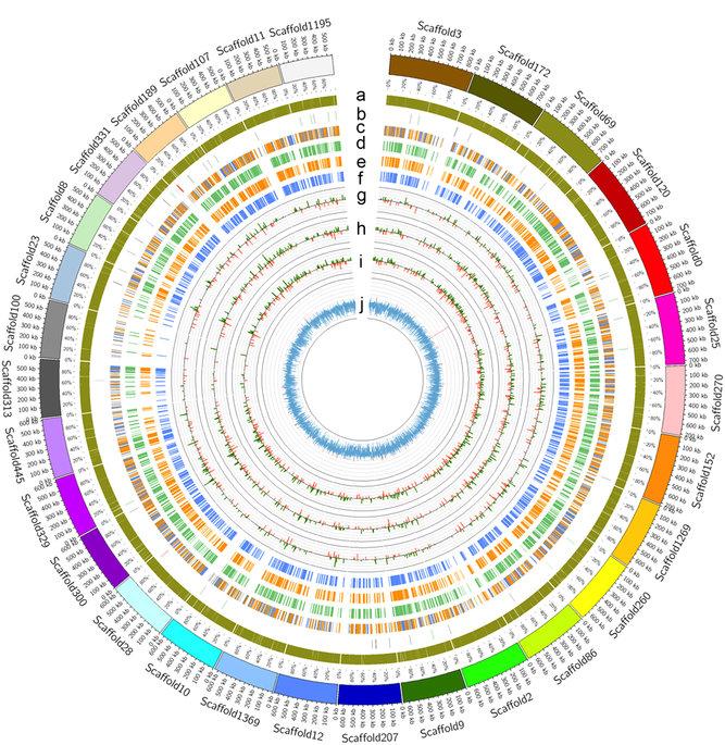 科学家绘制出橡胶树基因组草图