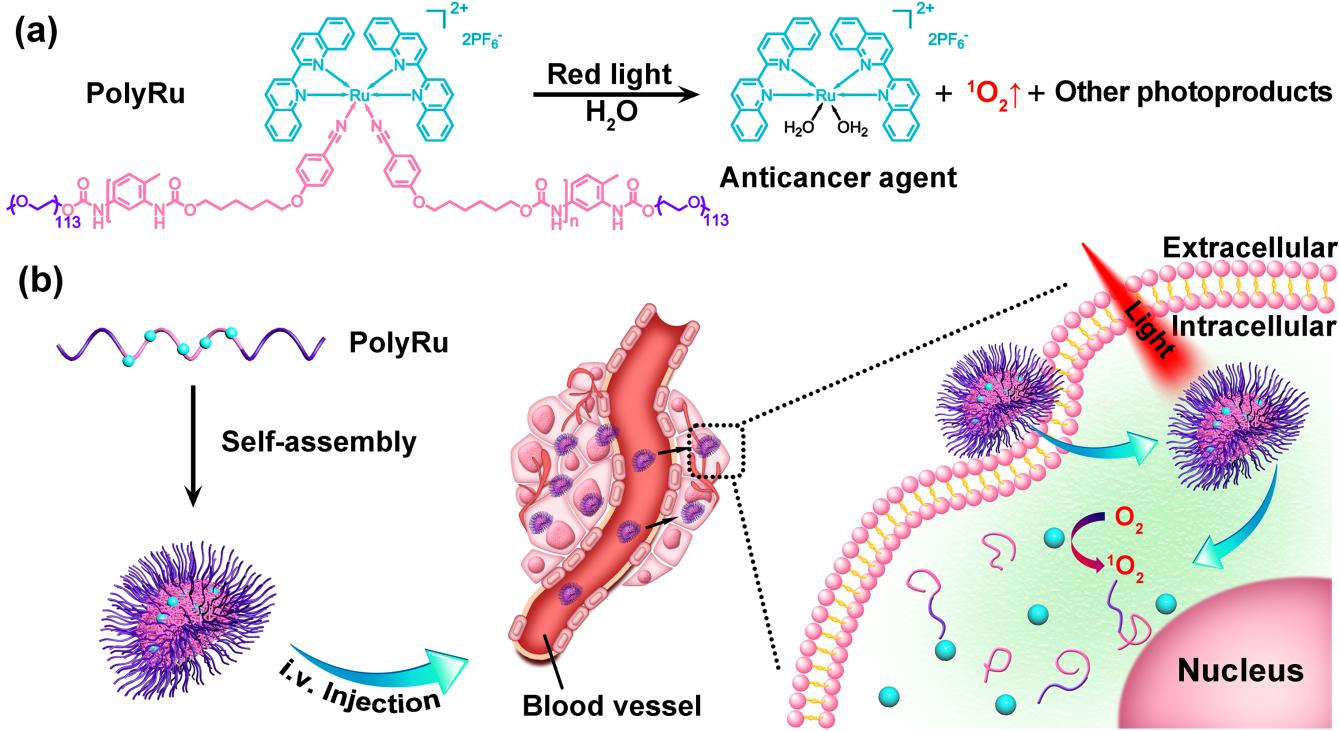 视杆细胞膜盘膜分子结构