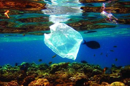 为解决海洋塑料污染 强生宣布停售塑胶棉花棒