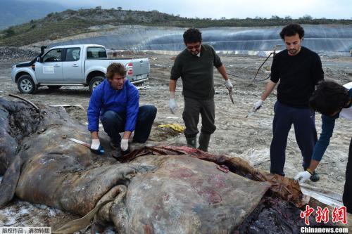 环保组织:2050年海洋垃圾将比鱼多 危及600物种