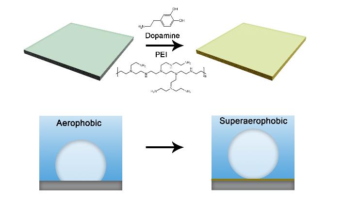 透明材料被广泛用于潜水镜、潜水艇舷窗等水下设备。许多聚合物材料如聚苯乙烯、聚碳酸酯及聚酯均具有高透光性,然而它们的化学结构导致其表面疏水,在水下易粘附气泡,影响其在水下的使用。解决这一问题的关键在于对材料表面进行亲水化处理,同时不影响其光学性能。  (制备过程示意图) 受贻贝腹足粘附蛋白中的儿茶酚结构单元启发,基于聚多巴胺沉积技术的表面化学近年来受到了研究者们的广泛关注。多巴胺能够在碱性溶液中氧化自聚并沉积到各种材料表面,一定程度上提高表面的亲水性。然而,聚