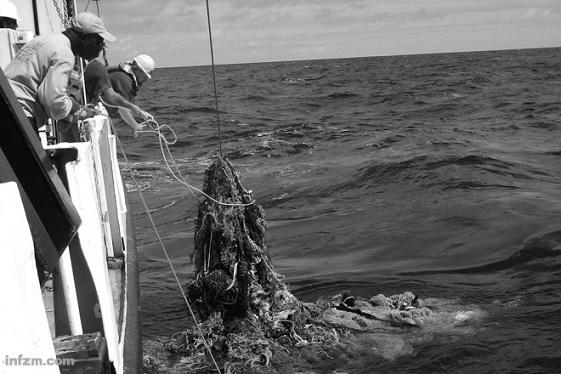 否则世界海洋中塑料垃圾的数量将超过鱼类.