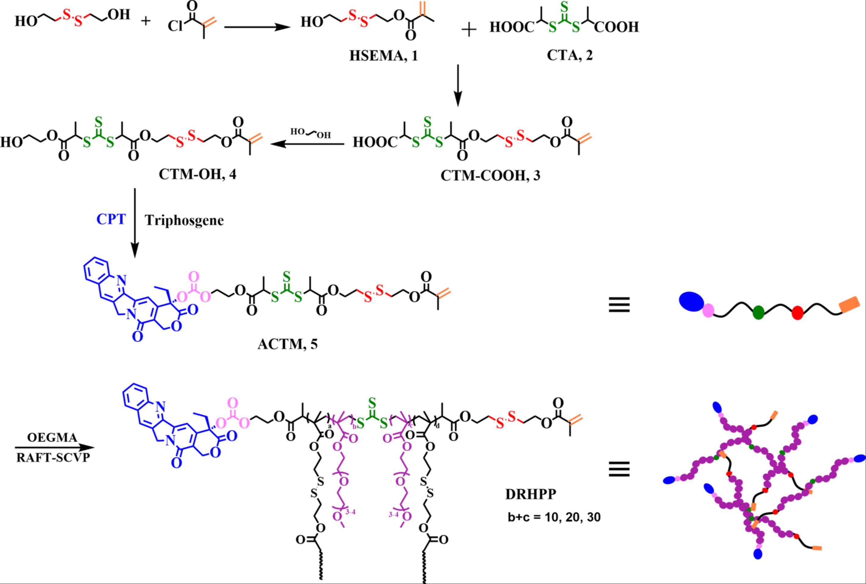 多功能化链转移单体和双重敏感性超支化聚合物前药的合成路线.