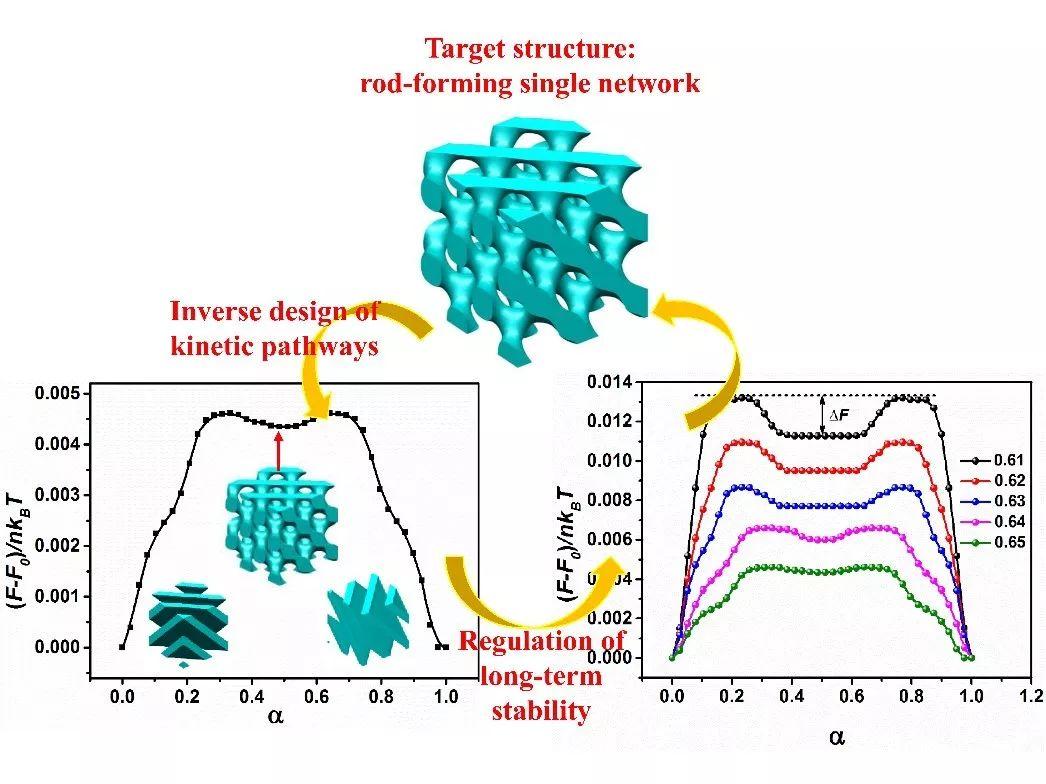 复旦大学唐萍教授课题组在刚-柔嵌段高分子体系的相变动力学路径研究
