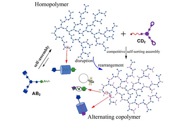 课题组关于超分子超支化聚合物可控