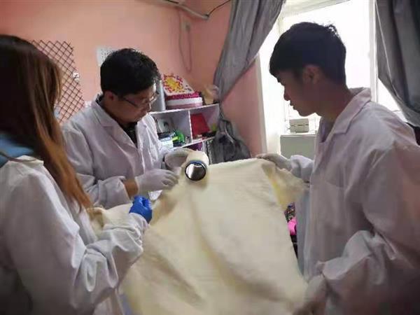 课题组功能弹力纤维和针织品开发取