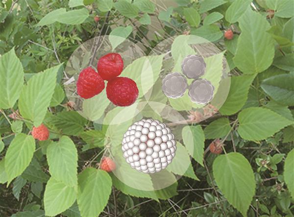 【2020.05.01】树莓状聚合物复合粒